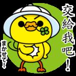 嘴饞的可愛日本家鴨♥ 四葉鴨3